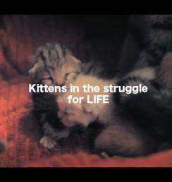 KittensInTheStruggleForLife_thumb